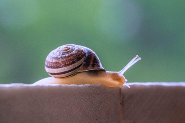 Caracol Lento. Es Momento De Iniciar Una 'slow' Life